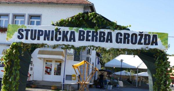 Brodski Stupnik - 35 . STUPNIČKA BERBA  GROŽĐA-2021